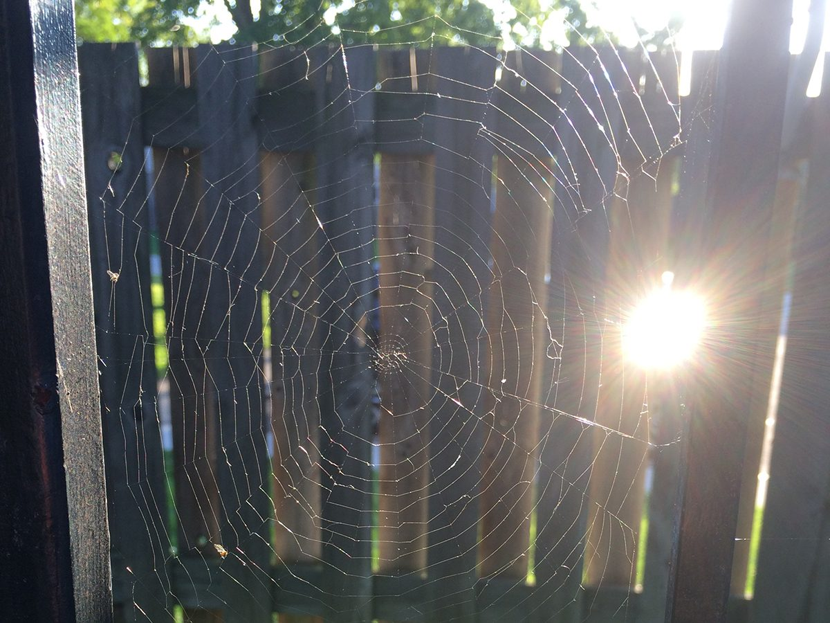 In the backyard photography - spider web