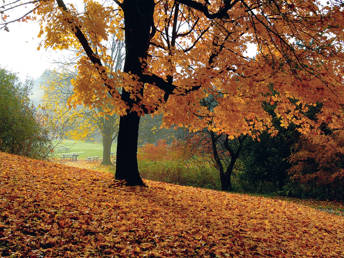 Autumn in Canada - fall leaves in Morningside Park