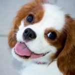 These 13 Breeds Make the Best Apartment Dogs