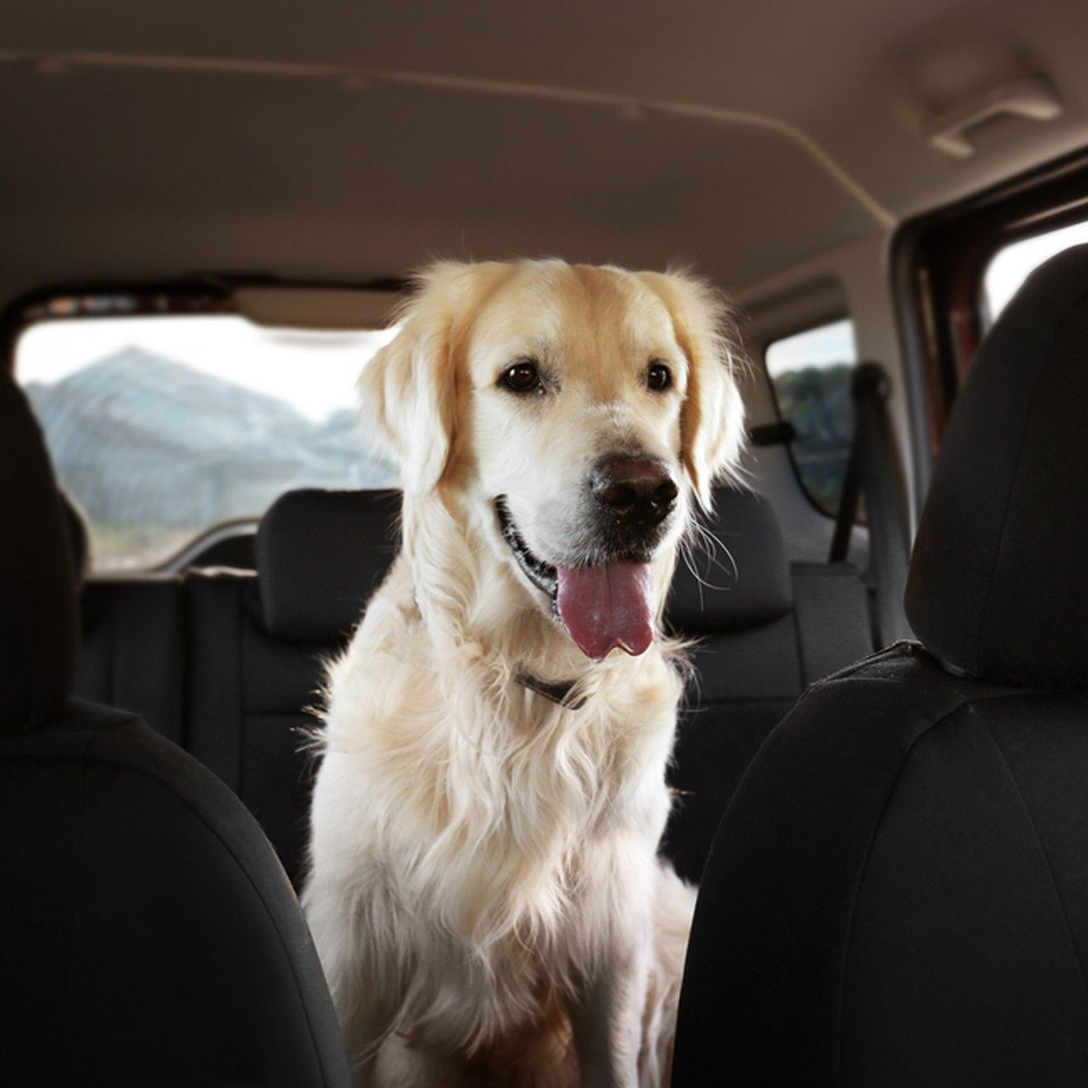 dog in car clean pet fur hair
