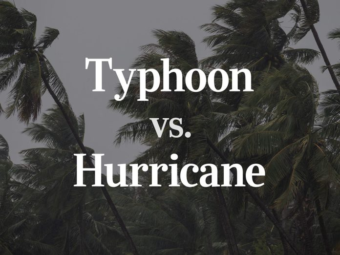 Typhoon vs Hurricane - text over wind blown palm trees background