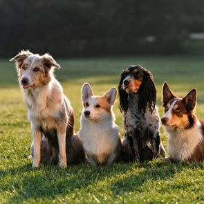 Dog breed based on your zodiac - group of various dog breeds