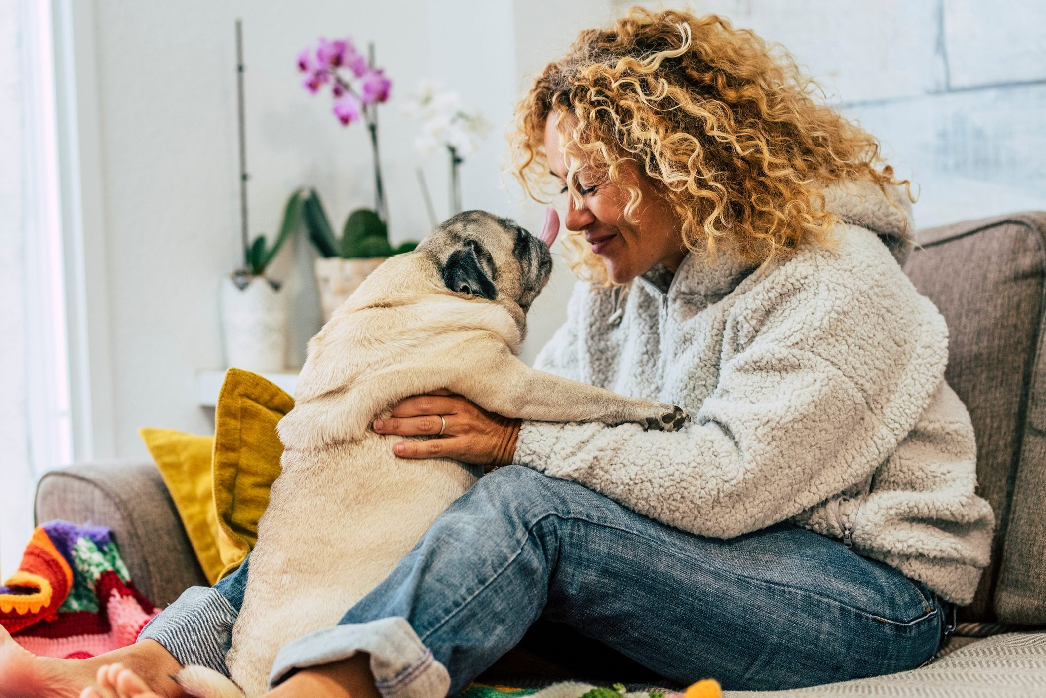 Most affectionate dog breeds - Playful happy activity at home with human woman people and funny pug dog kissing them on the sofa - cheerful young female play with domestic best friend at home