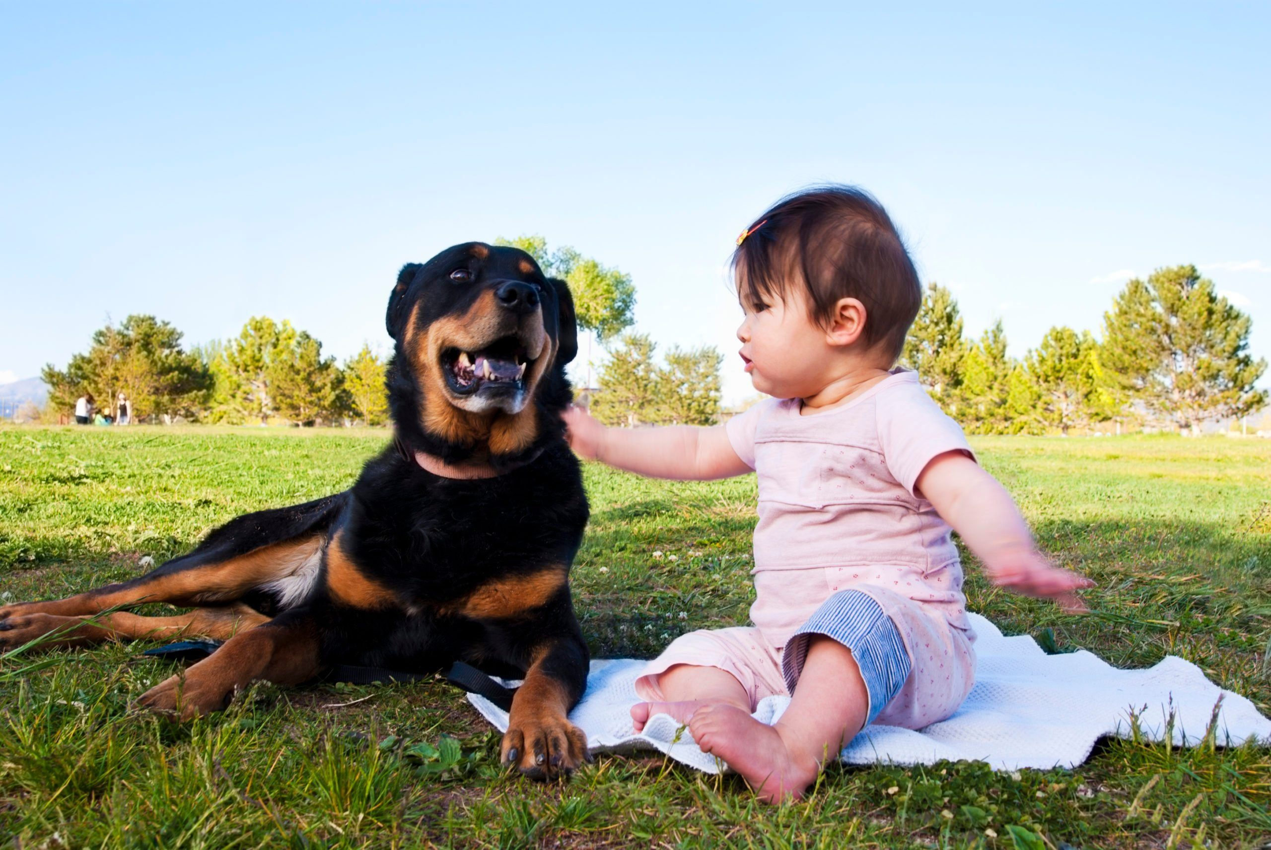 Most affectionate dog breeds - Friendship between dog and baby