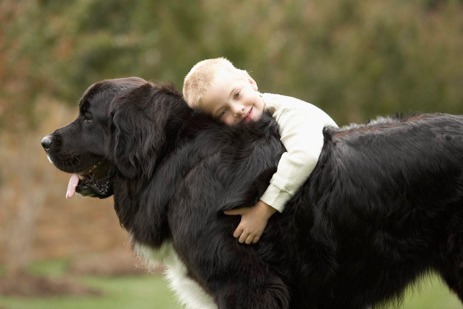 Most affectionate dog breeds - Boy (6-7) hugging black Newfoundland outdoors