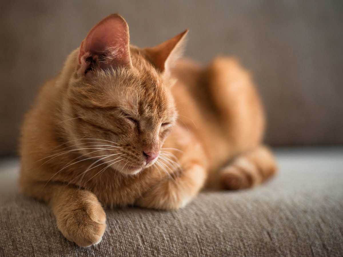 Best pet according to your zodiac - cat on sofa