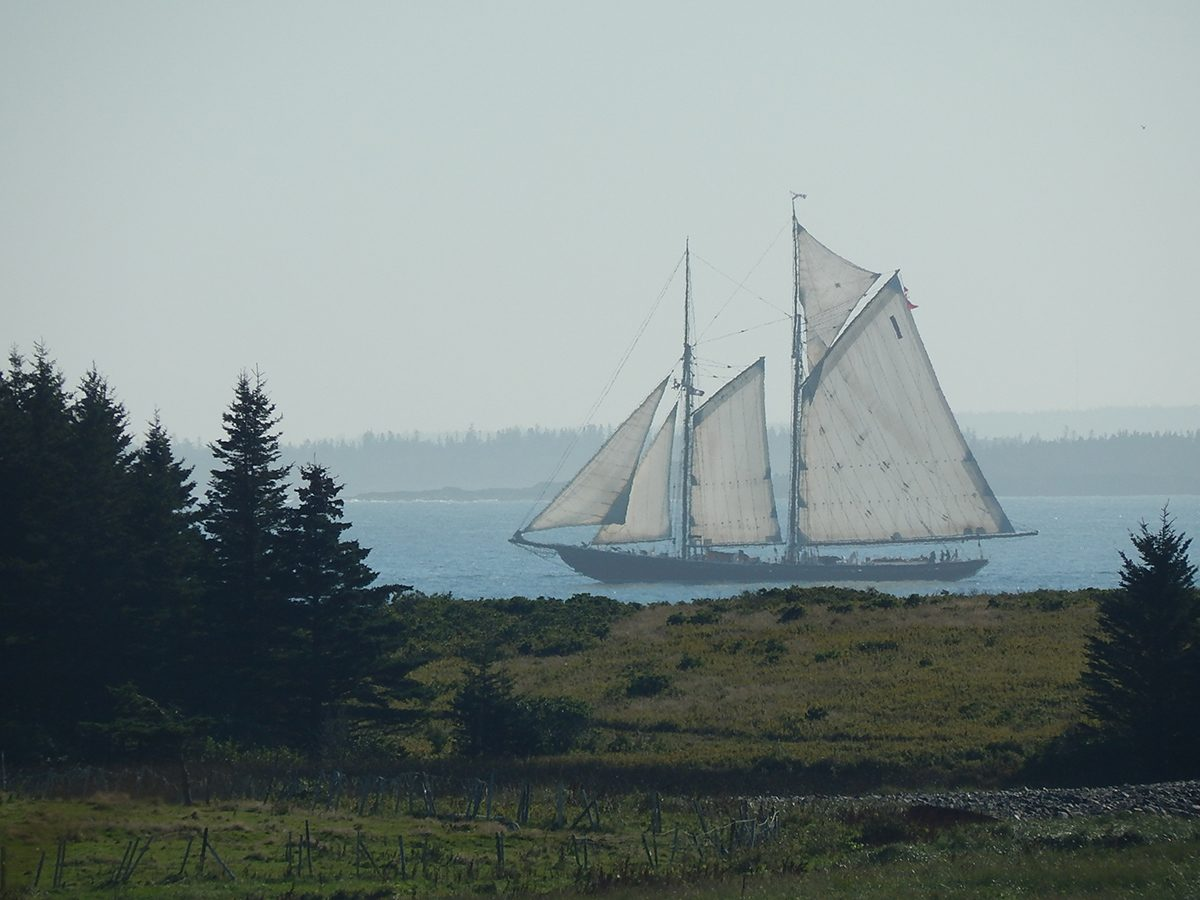 Best boat photography across Canada - Sailboat seen from backyard
