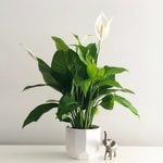 10 Hardy Indoor Plants You (Probably) Can't Kill