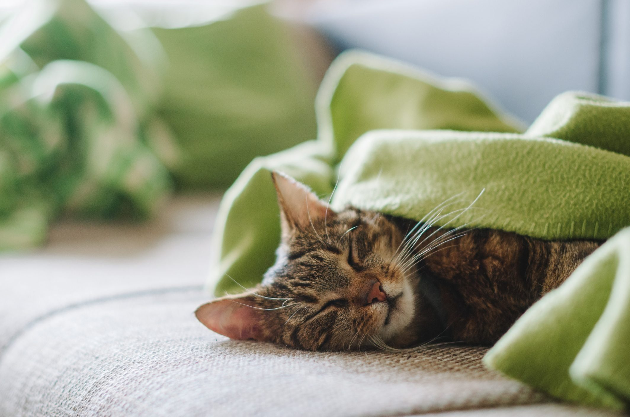 Slepping kitty