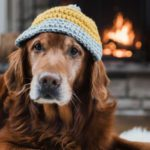 What Is the Best House Temperature for Pets?