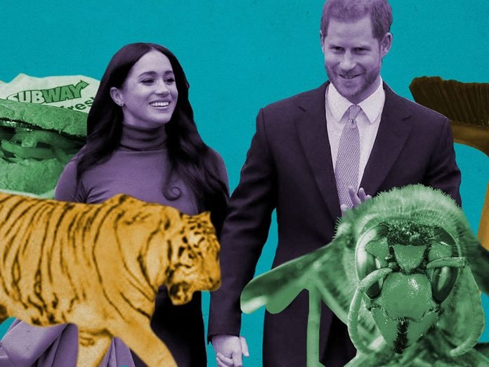 Bizarre things that happened in 2020 - Collage of Meghan Markle, tiger, murder hornet, broom, and subway sandwich