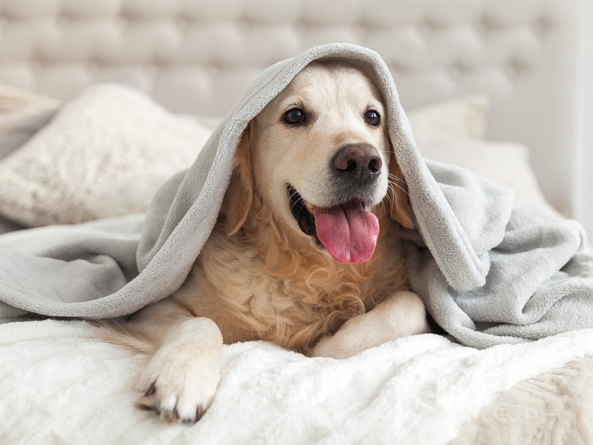 Best house temperature for your pet - Dog in bed