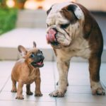 These Are the Most Popular Dog Breeds in Canada