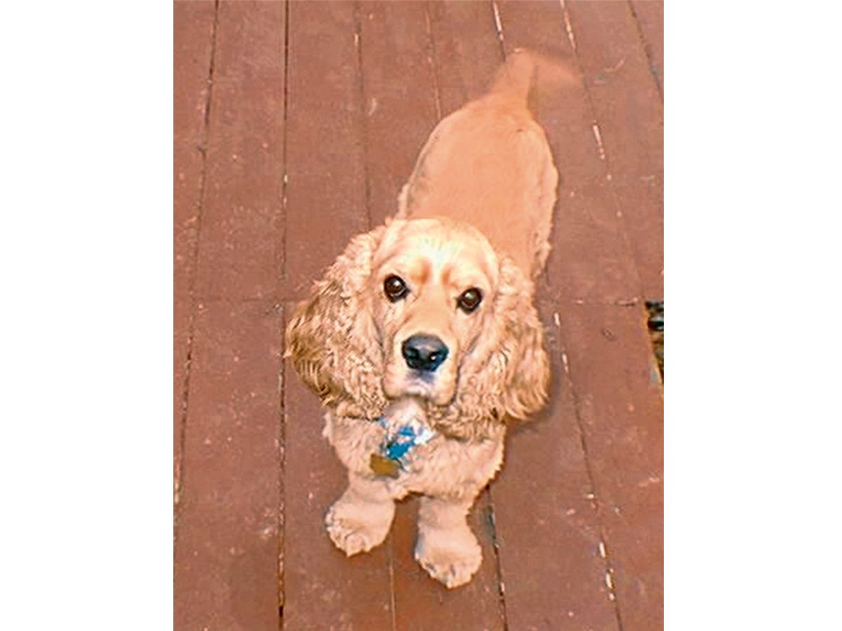 My dogs chose me - George