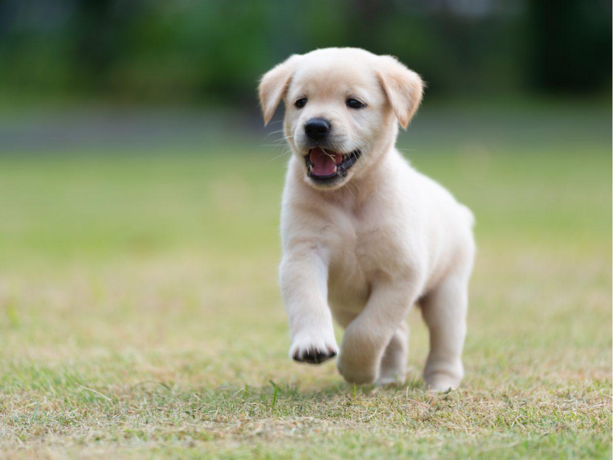 Puppy running outdoors