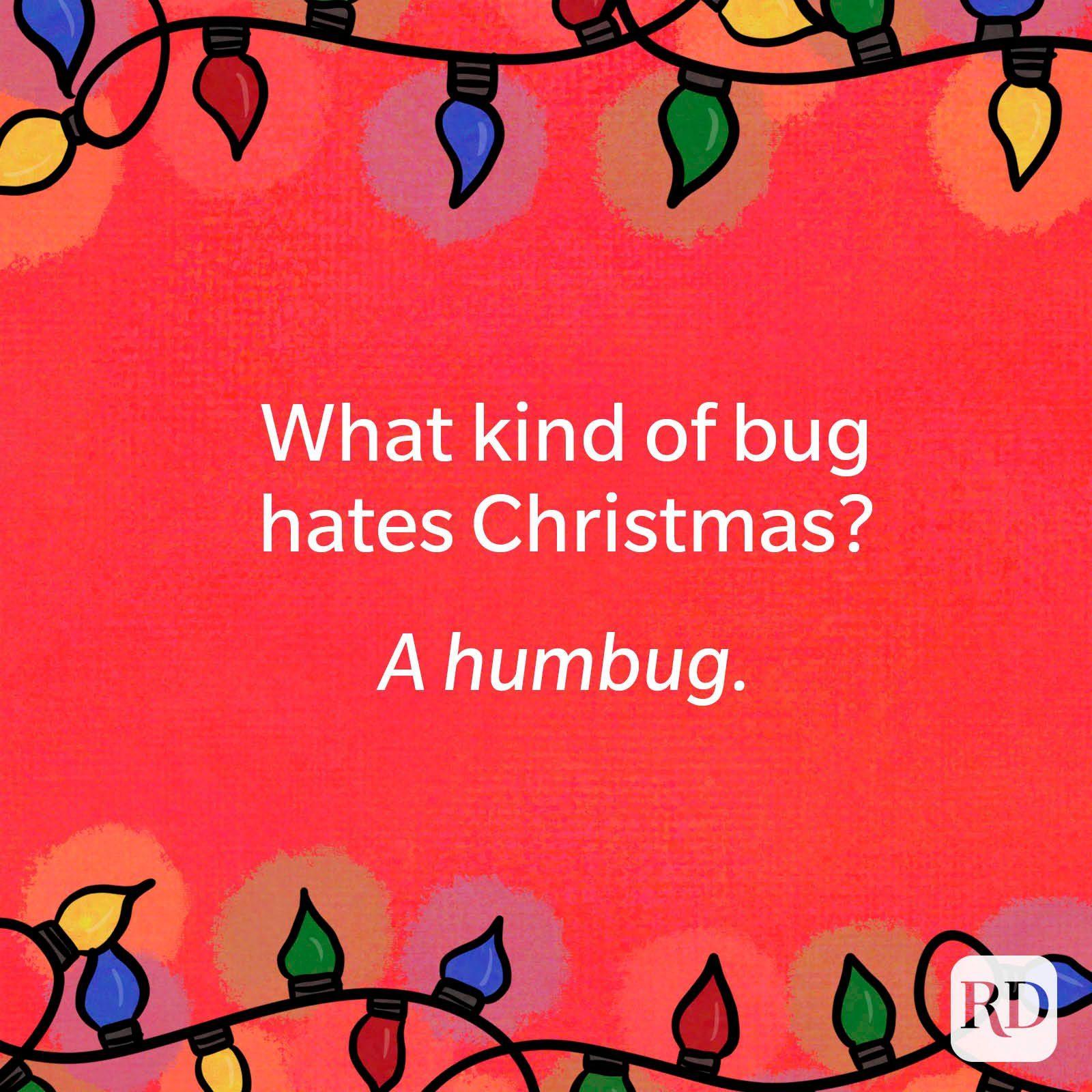 What kind of bug hates Christmas? A humbug.