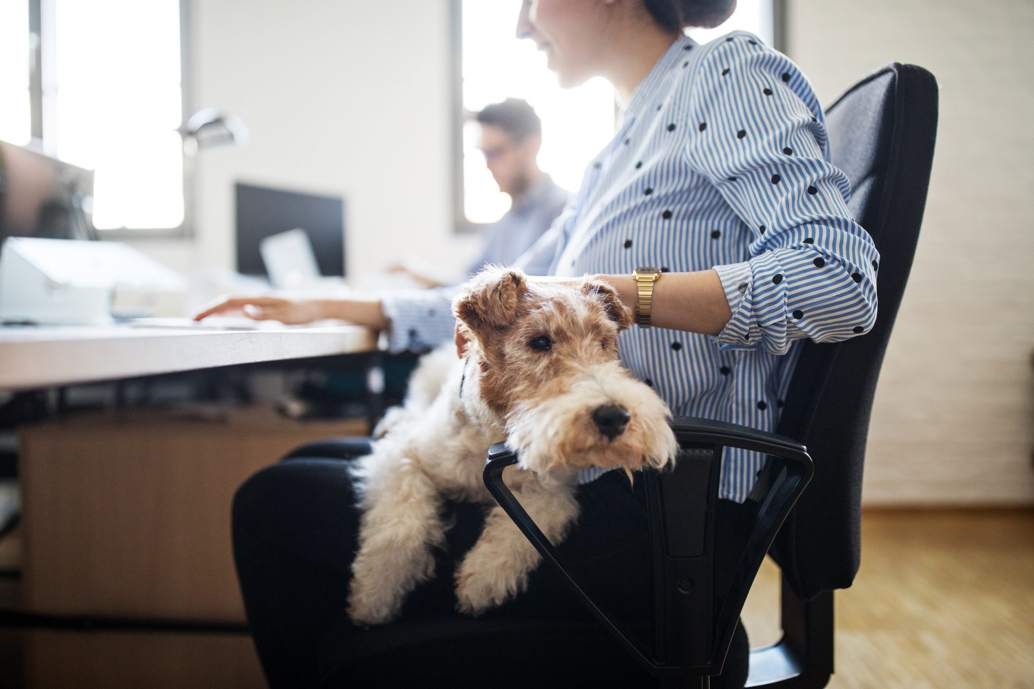 Businesswoman stroking dog sitting on lap