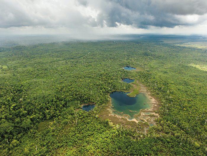 Good News Stories - Belize Maya Forest
