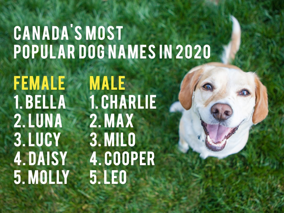 Most popular dog names in Canada 2020 - Top 5 list