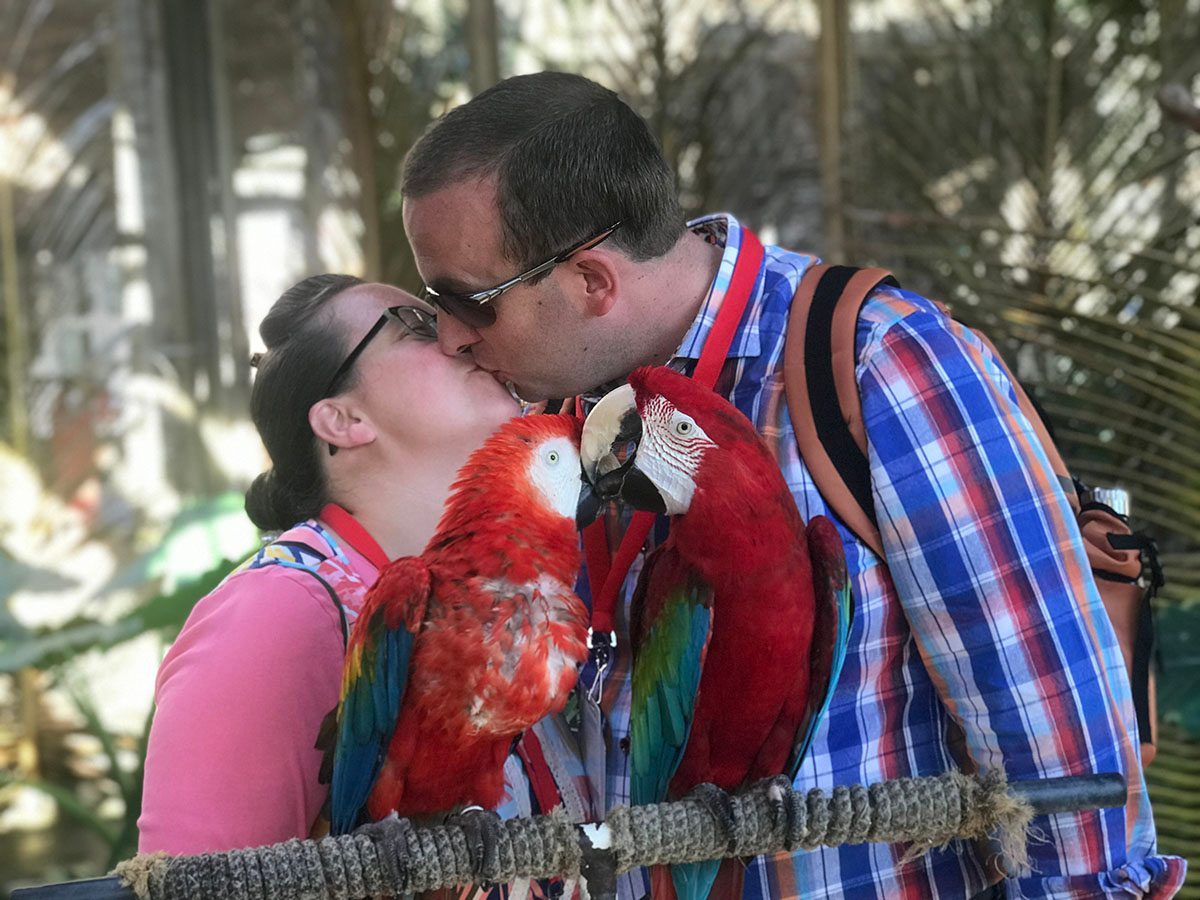 Couple kissing in front of two parrots