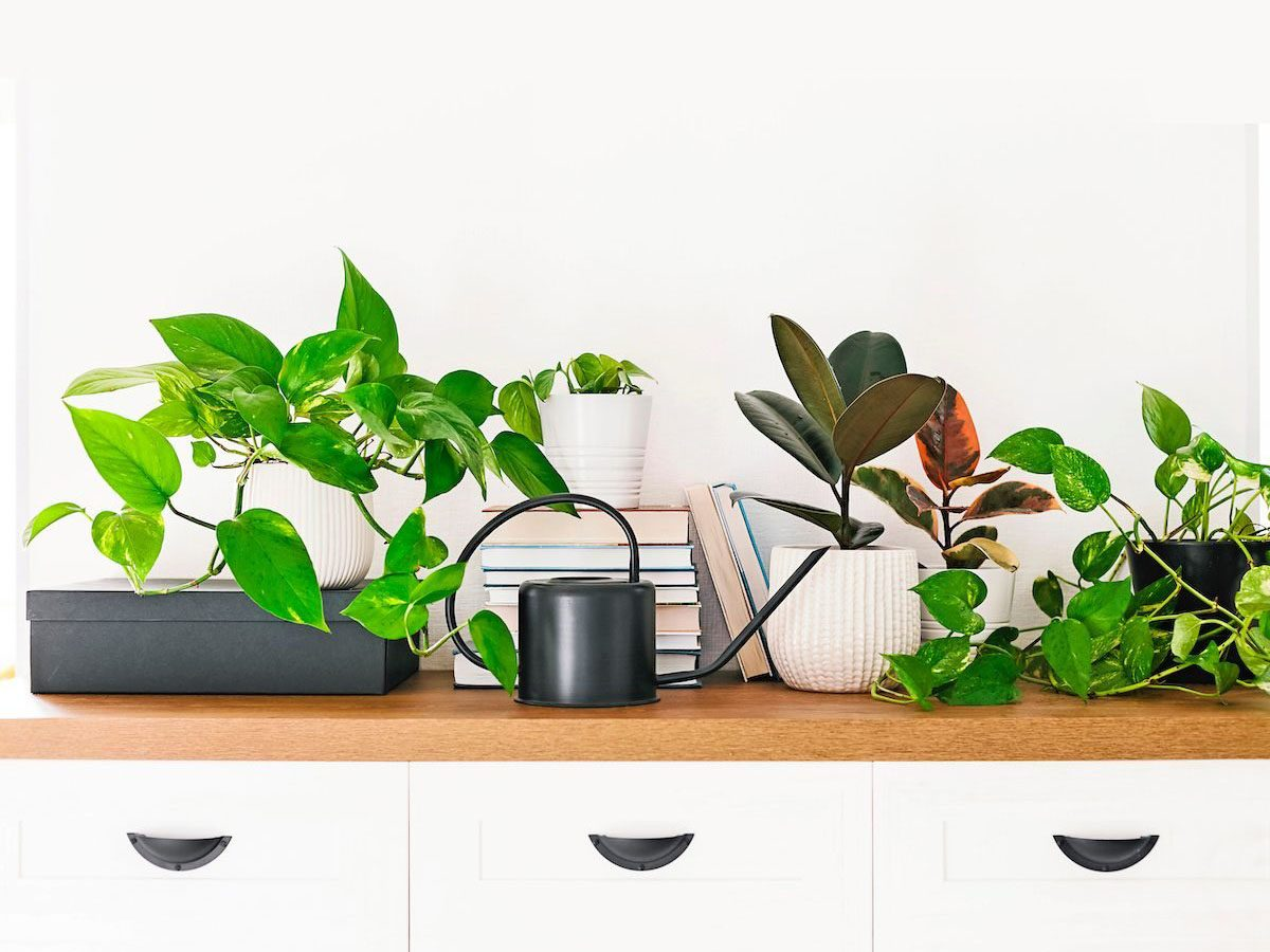 Different houseplants, pile of books and black watering can arranged on the wooden shelf. Scandinavina interiors detail; Shutterstock ID 1314596762; Use (Print or Web): Print; Client/Licensee: BNB DJ21; Job: BNB DJ21; Other: Sharon Nelson