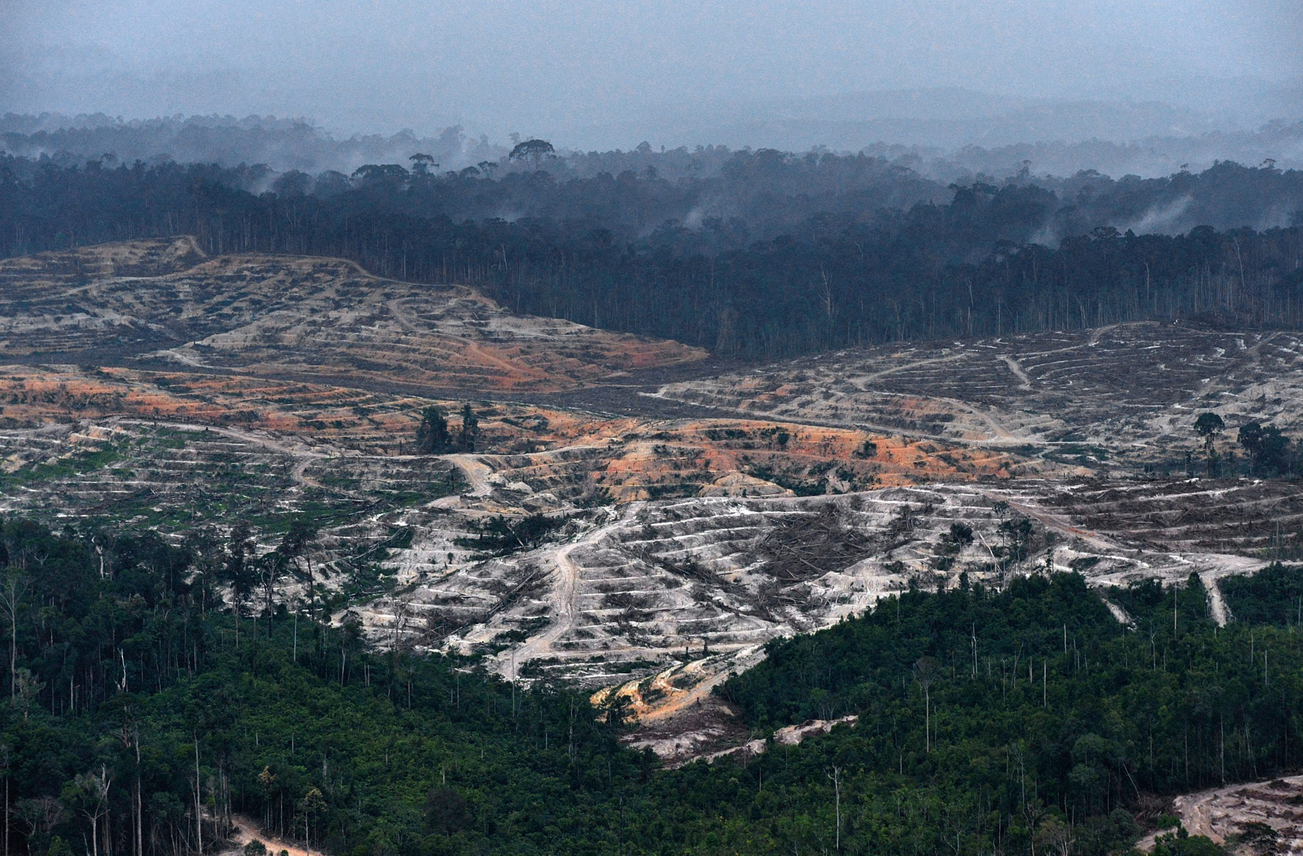 INDONESIA-US-ENVIRONMENT-FORESTS-COMPANY-PROCTER