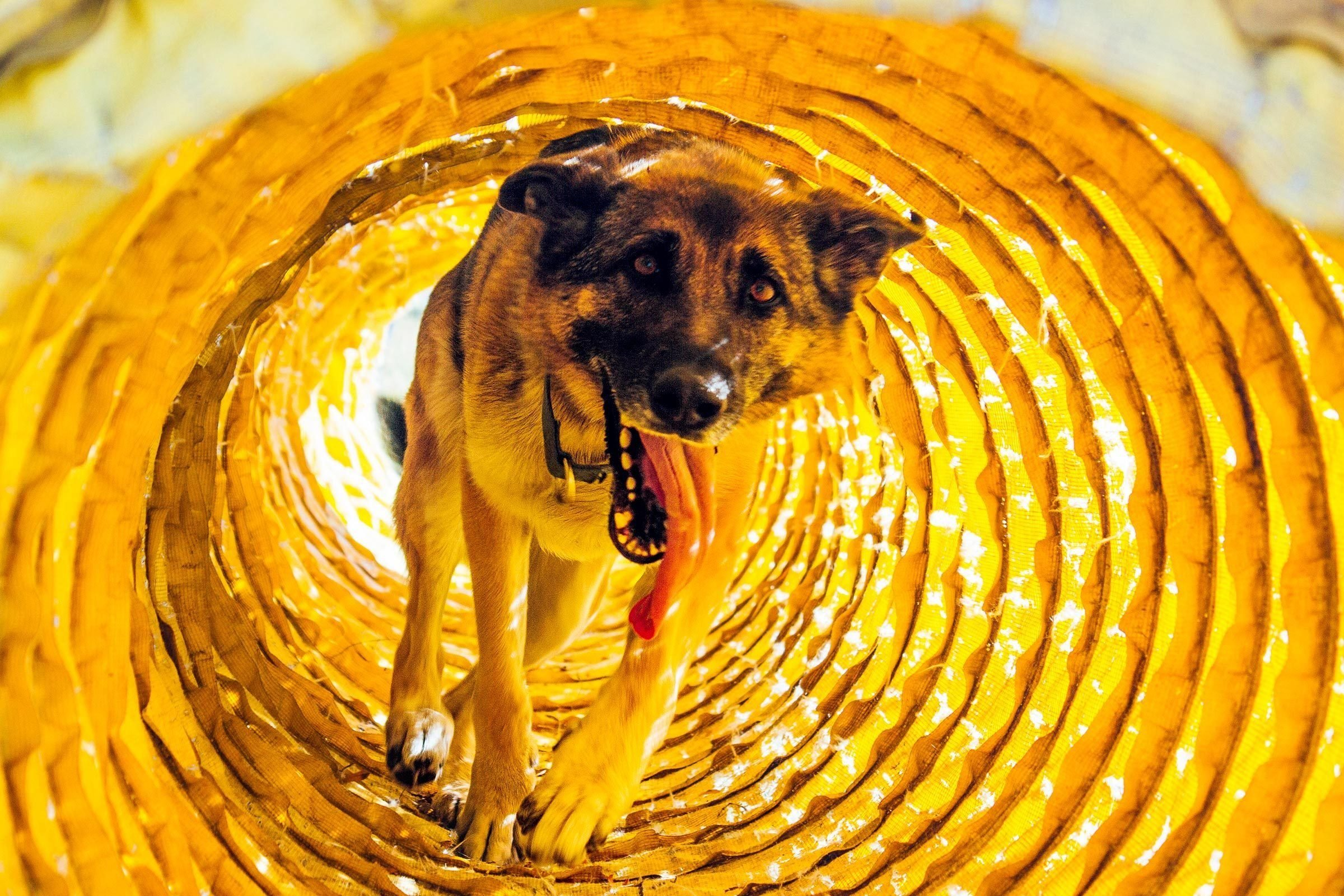 Osa in a training tunnel