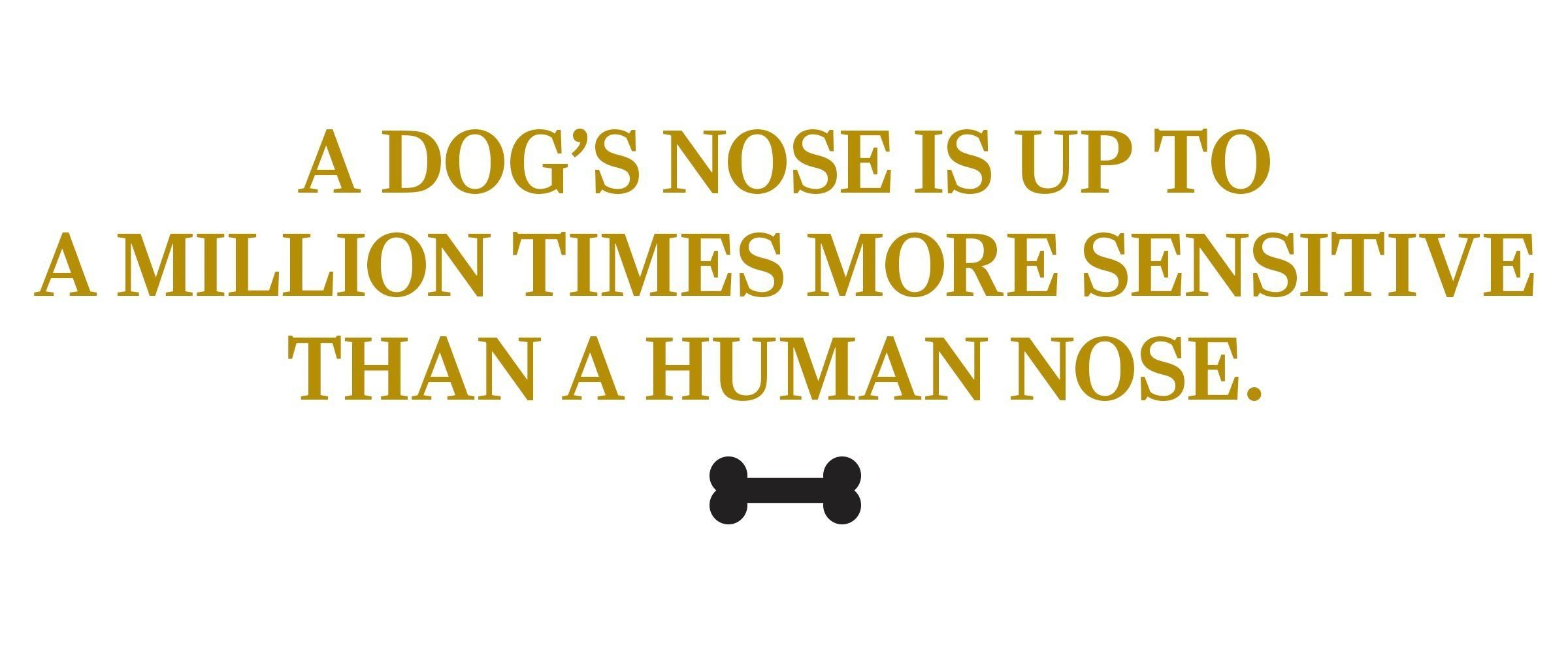text: A dog's nose is up to a million times more sensitive than a human nose.