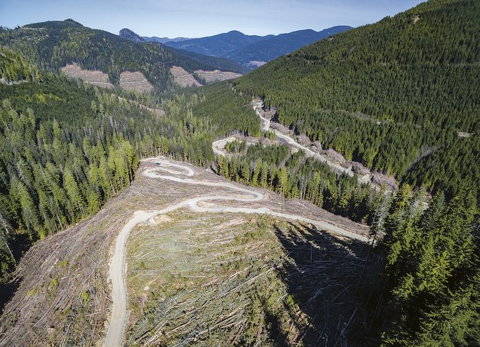 Old growth forest and logging in B.C.