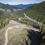 Inside the Long Battle to Save B.C.'s Old-Growth Forests