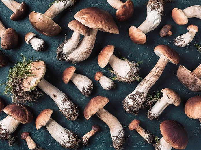Organic Forest Food Edible Fresh Picked Porcini Mushroom Autumn Harvest Concept Boletus Edulis Mushrooms On Dark Background Copy Space Top View