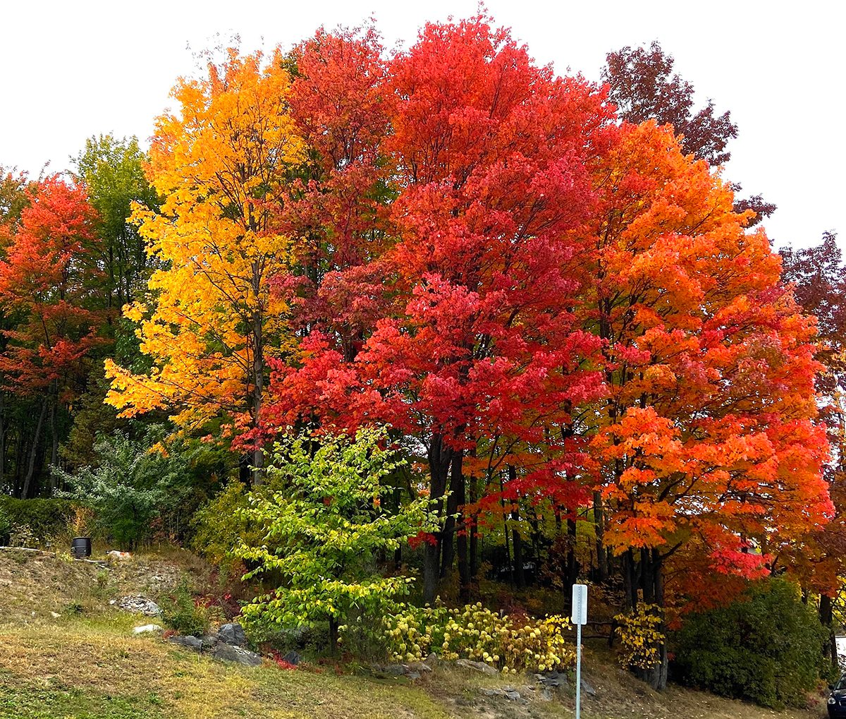 My Happy Place - Bright Fall Foliage