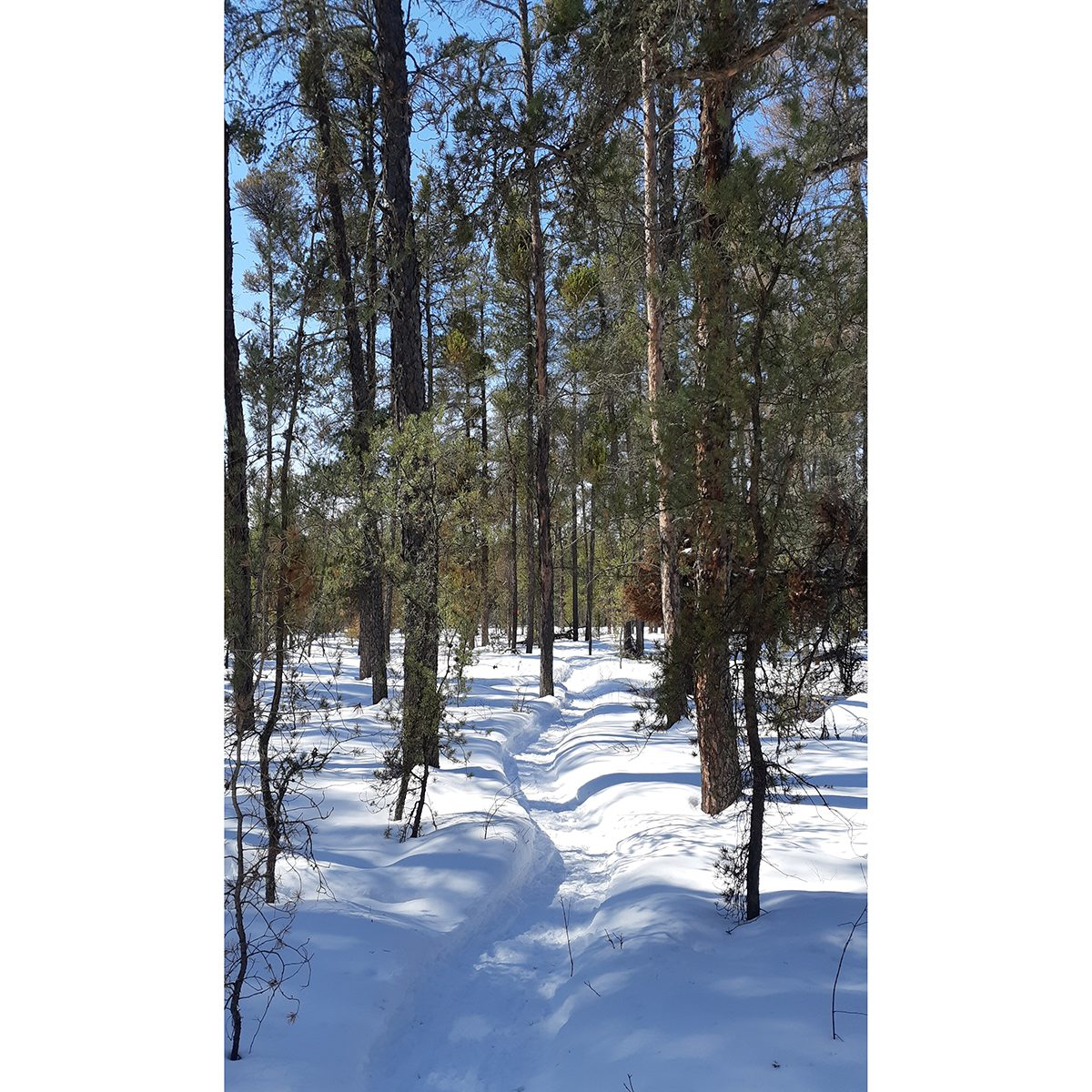 My Happy Place - Forest Trail Through Snow