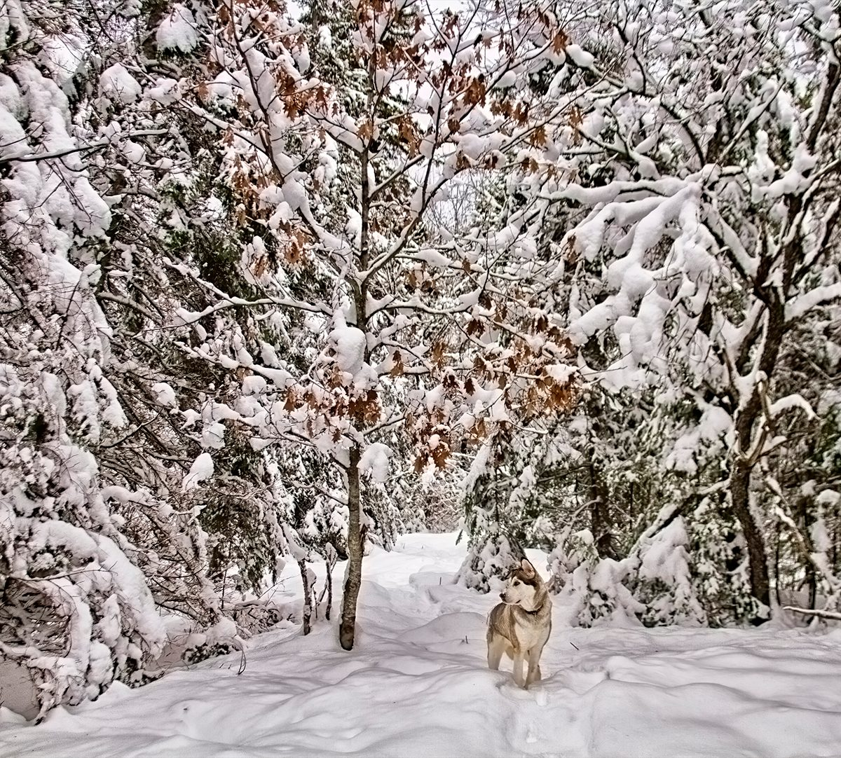 My Happy Place - Snowy Forest With Dog