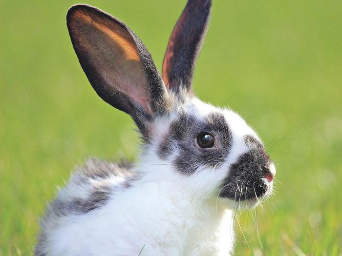 A Rabbit On Green Grass