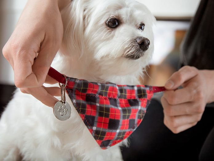 Most Popular Pet Name for past 125 Years - dog with tag