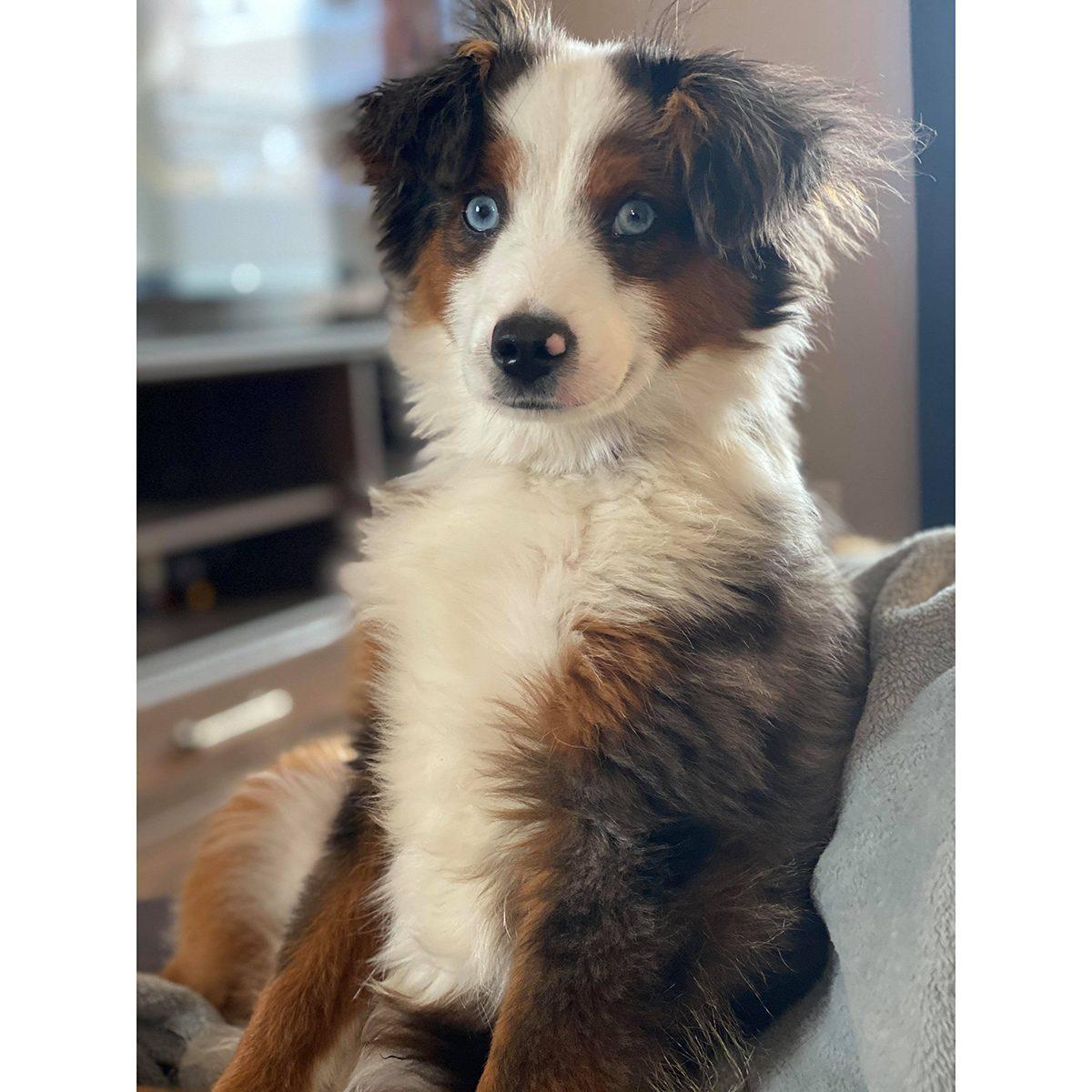 Pandemic Pet Adoption - Koda