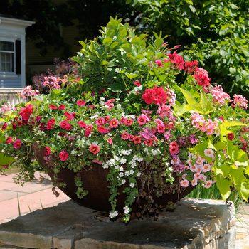 best annual flowers for pots - planter pot flowers
