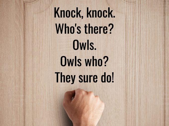 Best Knock Knock Jokes - Owls