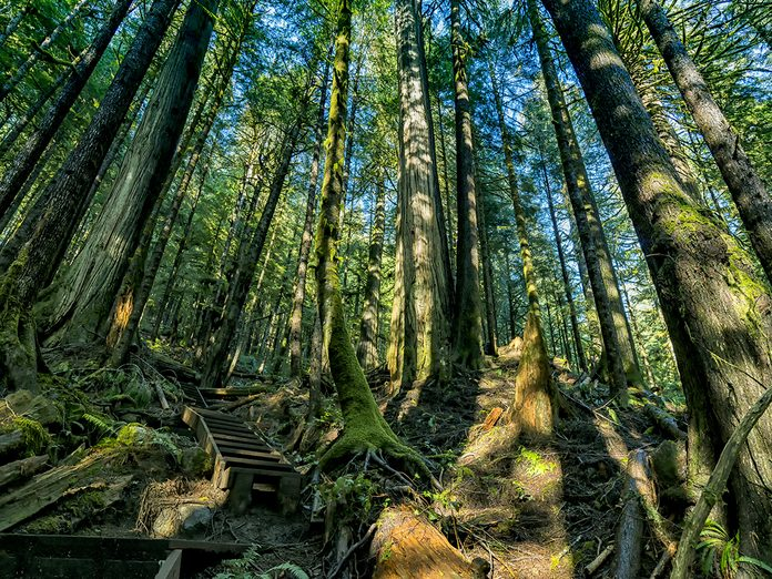 Earth Day Quiz - B.C. Old-Growth Forest