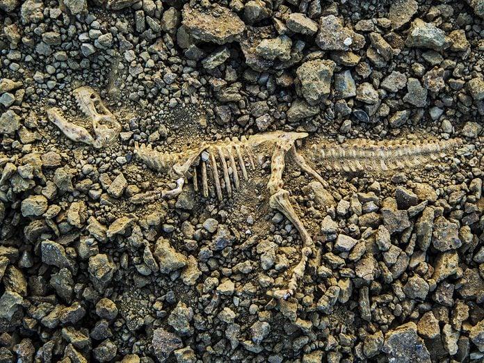 Earth Day Quiz - Dinosaur Bones