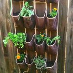 How to Grow a Hanging Herb Garden in a Shoe Organizer