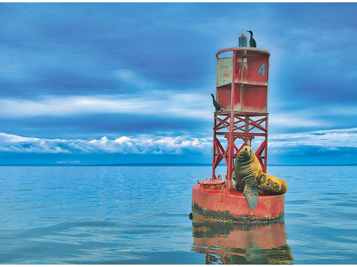 Our Canada Share Your Canada Photo Contest - Sea lion on buoy