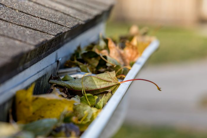 Attracting mosquitoes - Clogged gutter