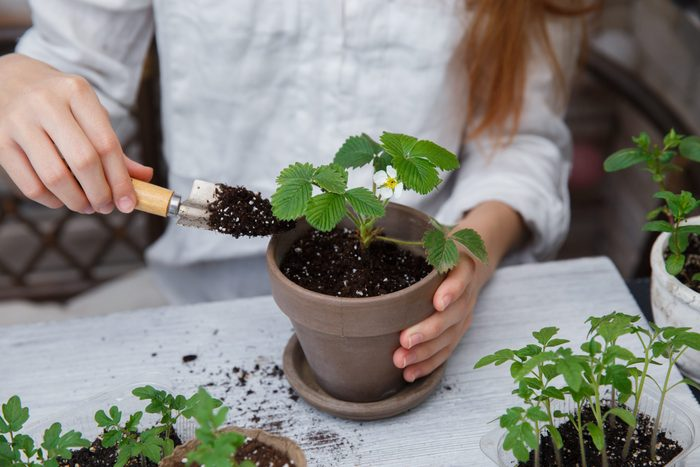 Attracting mosquitoes - Plant saucer