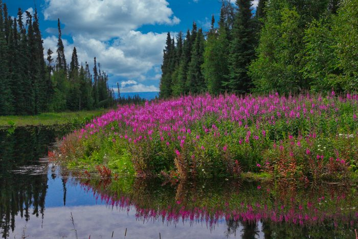 Alaska Adventure - Beautiful Amazing Alaska 8x6 300