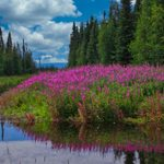 This Alaska Adventure Will Inspire Your Next Road Trip