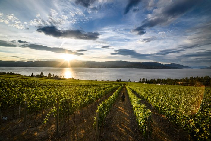 Best place to watch the sunset in every province - Cedar Creek Estate Winery