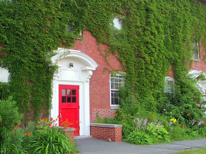 Doors across Canada - Red door in green ivy