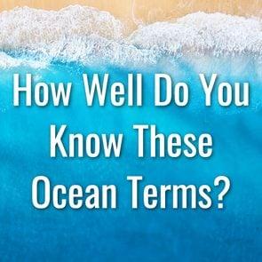 Ocean Words Quiz